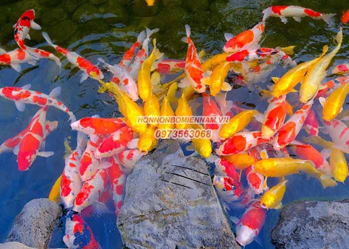 hồ cá koi đẹp-5