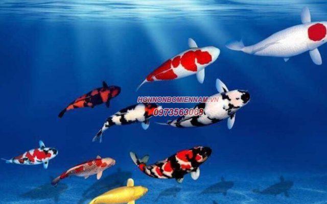 Thiết kế thi công hồ cá koi tại Bình Thuận - Cá koi