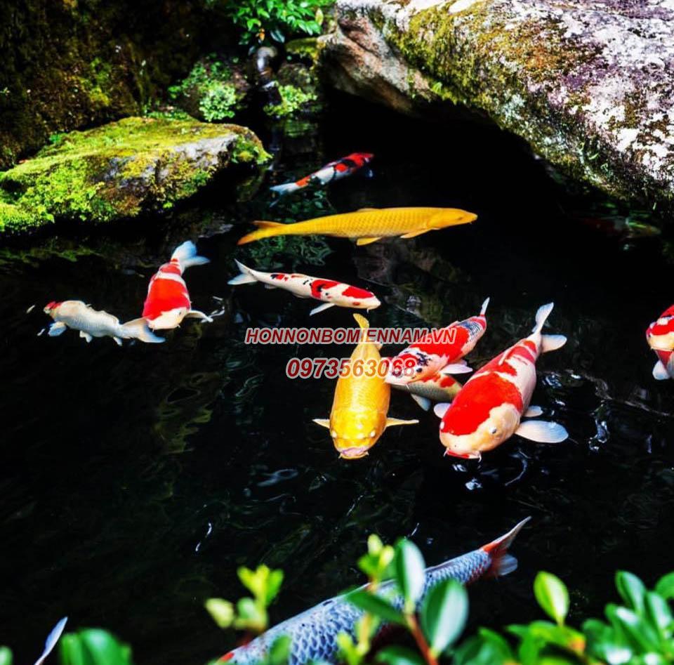Thiết kế thi công hồ cá koi tại Tây Ninh. Ảnh: 5