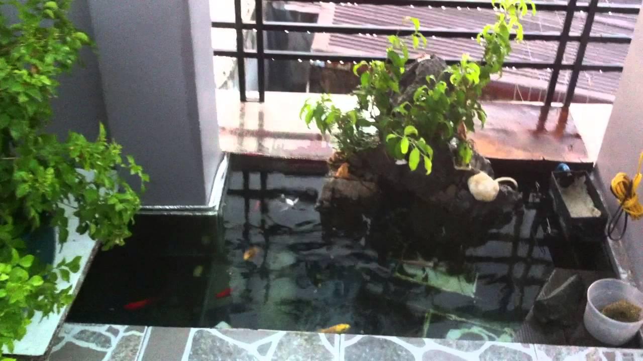 Thi công hồ cá koi tại TPHCM