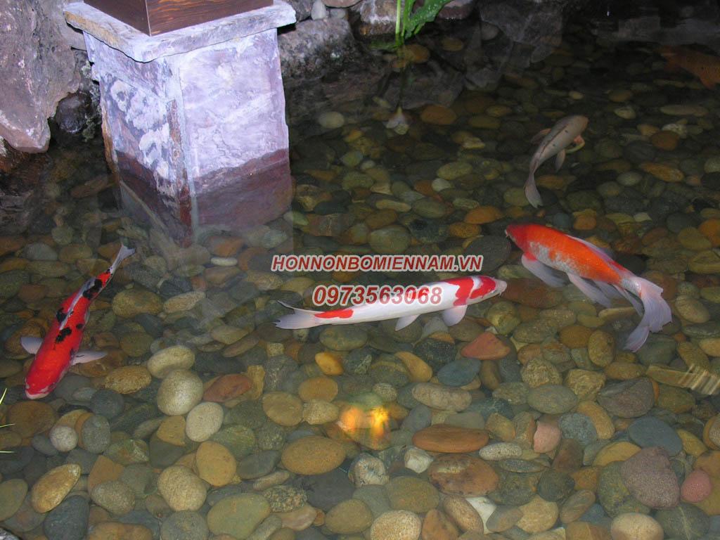 Thiết kế thi công hồ cá koi tại Nha Trang