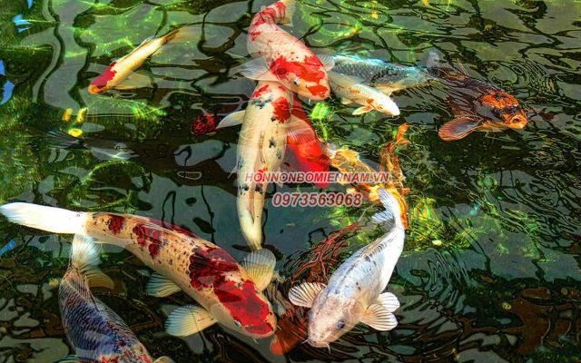 Thiết kế thi công hồ cá koi tại Gia Lai