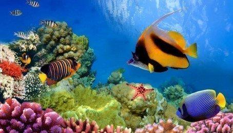 Cá cảnh đẹp và rẻ