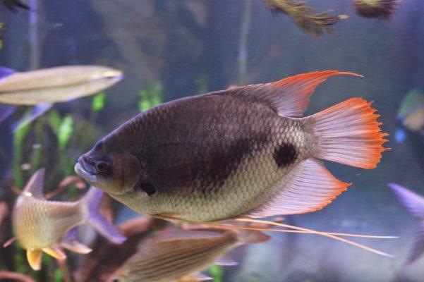 Cá kiểng đẹp