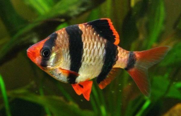 Cá kiểng đẹp nhất