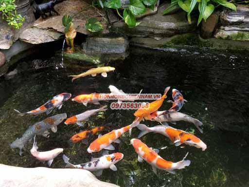 Các loại bể cá koi
