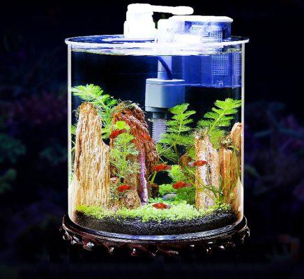 Bể cá dạng hình trụ thiết kế đẹp mắt