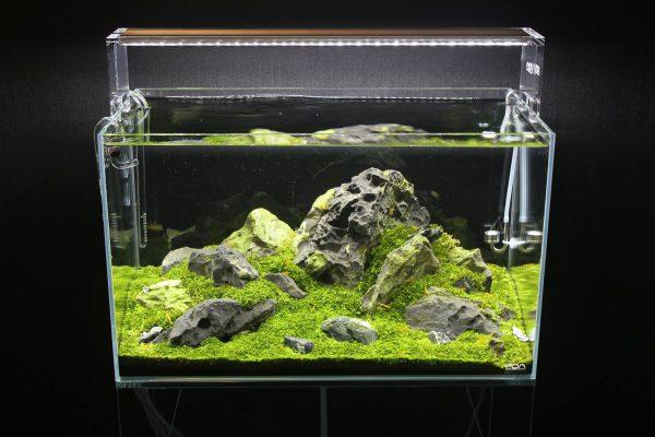 Hồ thủy sinh mini kích thước theo yêu cầu