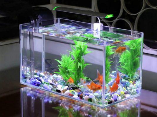 Hồ cá bằng kính mini