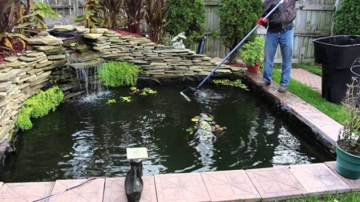 bể cá ngoài trời bj rêu