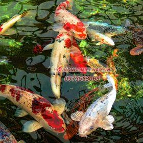 thiết kế thi công hồ cá koi tại Đà Nẵng