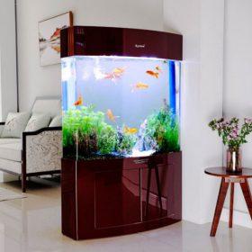 hồ cá trong nhà