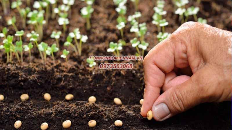 Gieo hạt