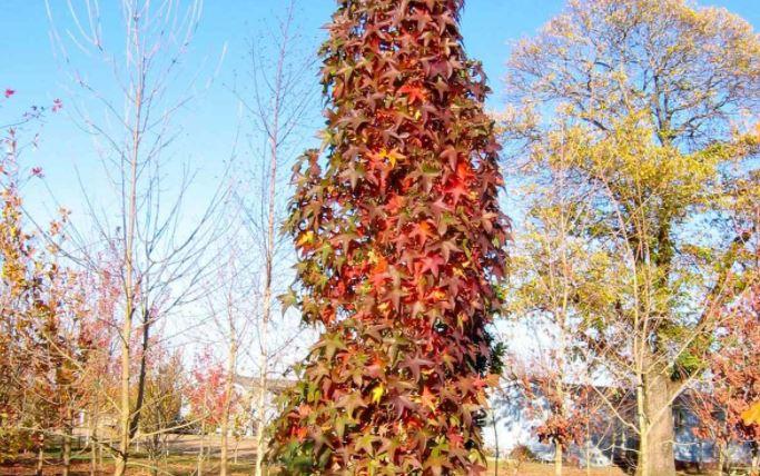 cây tiết kiệm diện tích