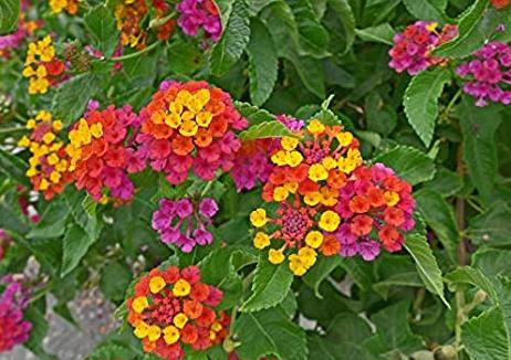 chọn hoa đẹp