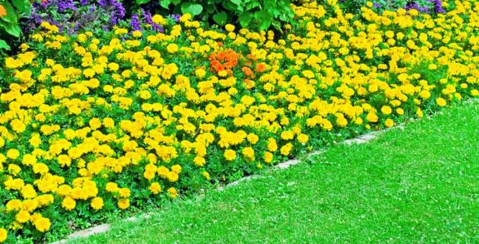 tạo luống hoa