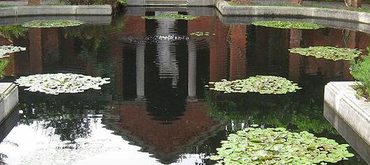 thiết kế vườn nước