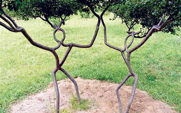 tỉa cành và cây