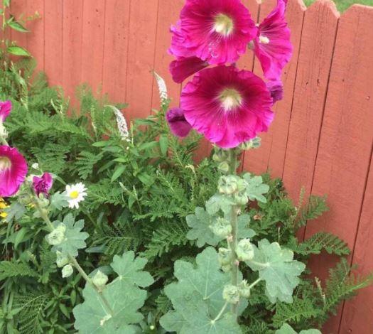 tự gieo hoa