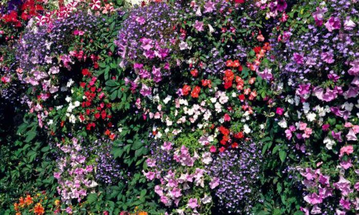 tường hoa