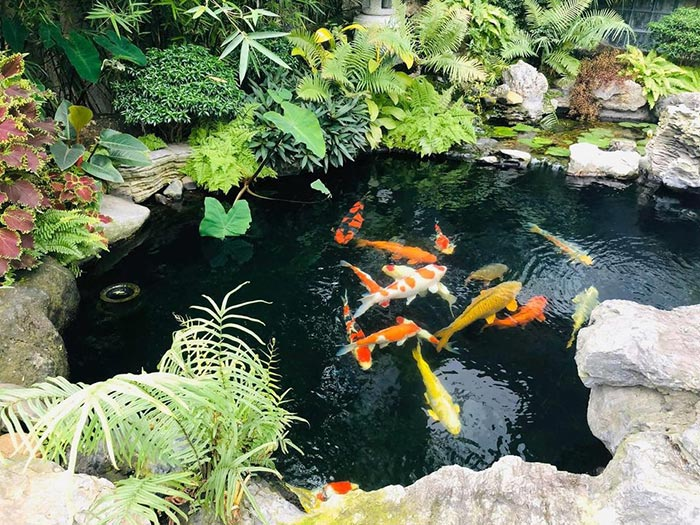 Hồ cá koi sân vườn đẹp 15