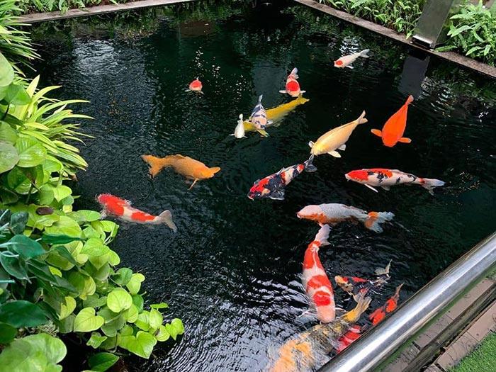 Tổng hợp mẫu thiết kế hồ cá koi ngoài trời đẹp 7