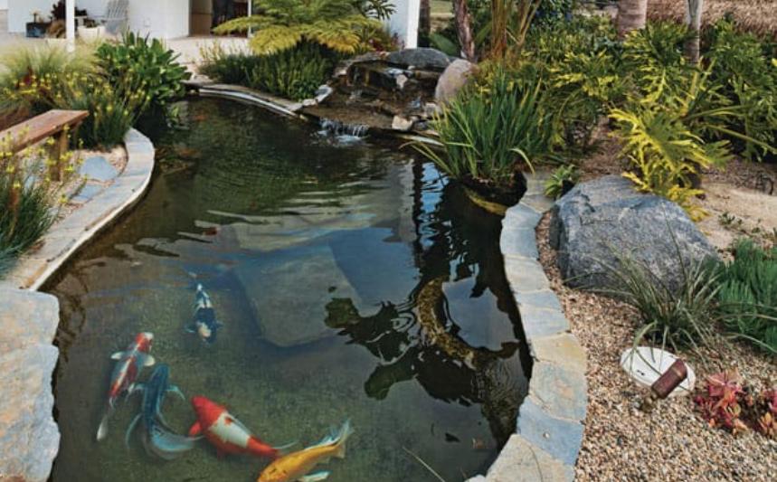 hồ cá koi trang trí sân sau